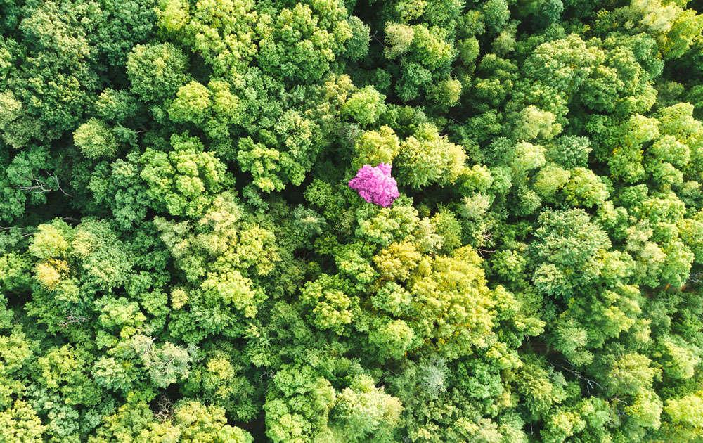 AI-skolan - hur fungerar random forest